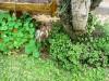 mint tea and nasturtiums for herbicides