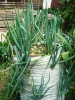 growing green onions in a sack