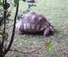 tortoise on museum grounds