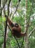 Kalimantan-7-b