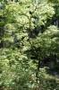 forest near monastery